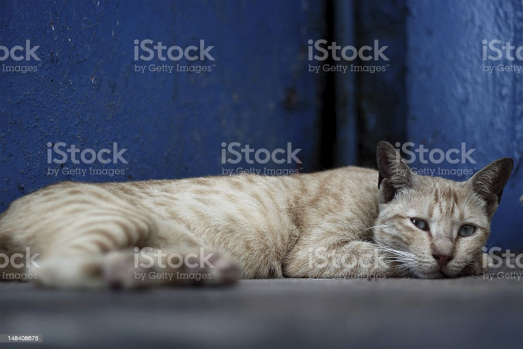 Cat lying on the floor royalty-free stock photo