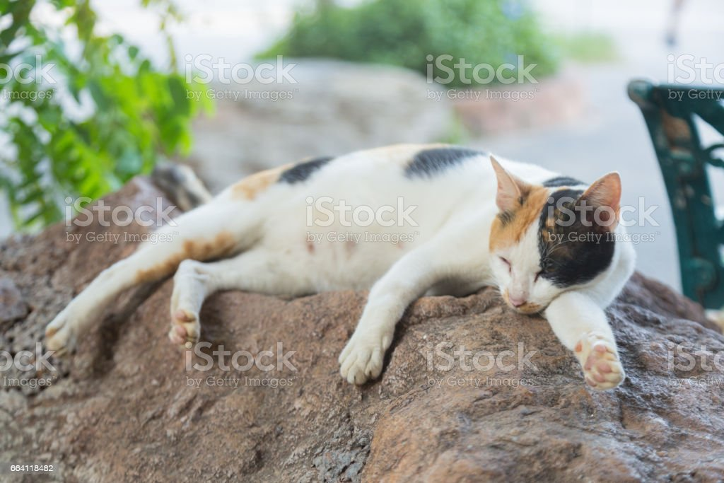 cat lying on the floor foto stock royalty-free