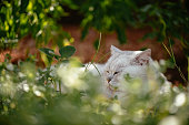istock Cat Lying on the Grass and Enjoying the Nature 1271287880