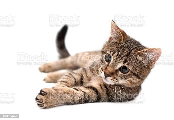Cat lying on white picture id153004473?b=1&k=6&m=153004473&s=612x612&h=etjqt65n7 xjgmfwnz hsiw76j5pbhhweqnzk3vm4sm=