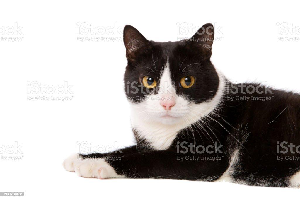 cat lying stock photo