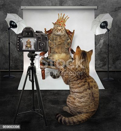 istock Cat makes a photo of the king 959663398