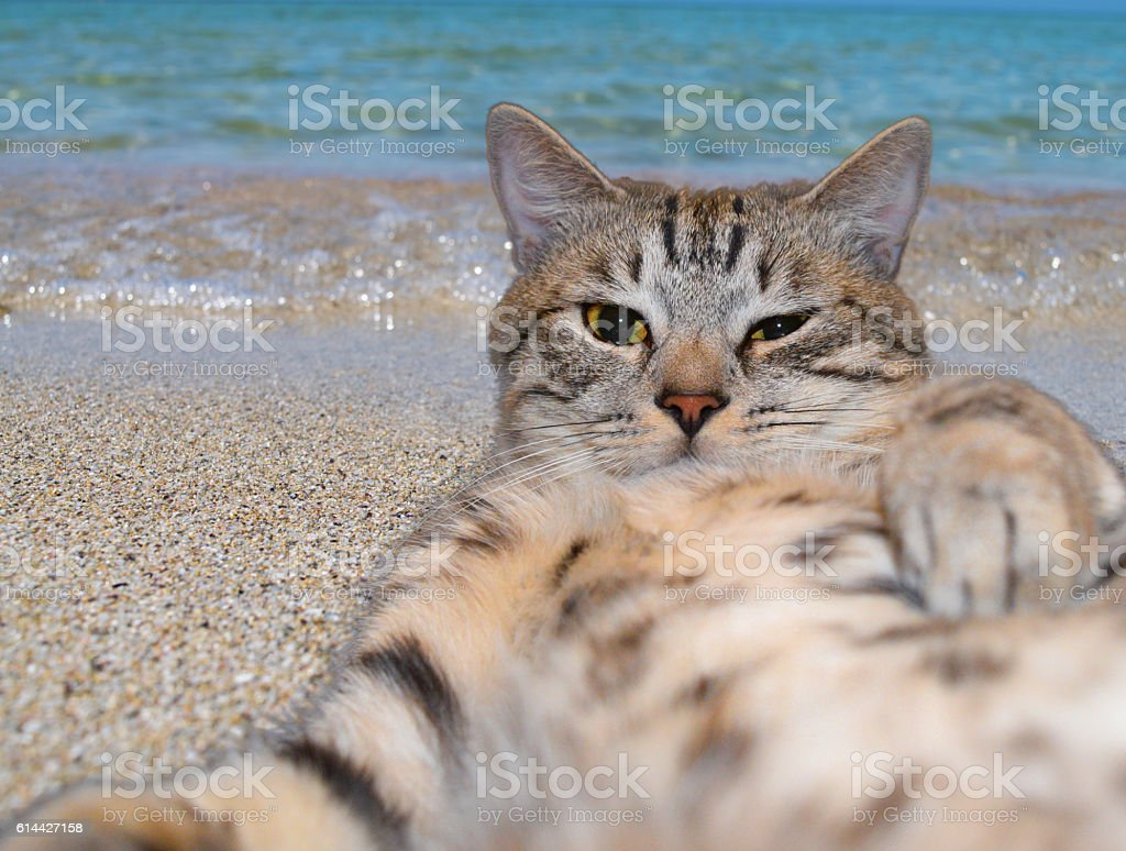 Cat makes selfie lying on the sand on a beach stock photo