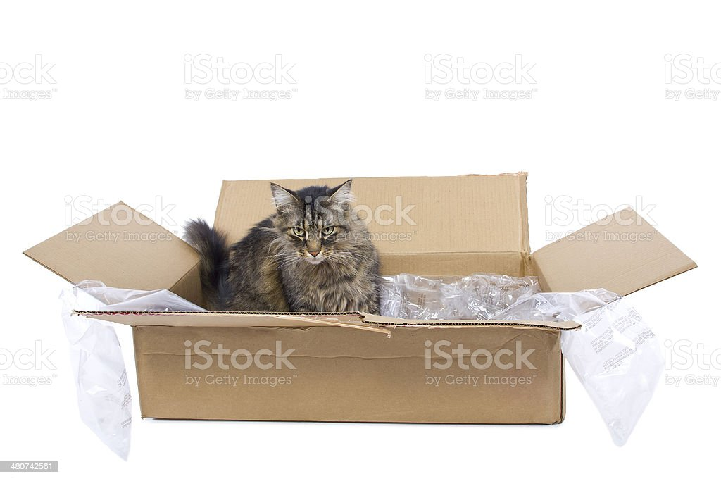 Cat Making A Mess of a Shipping Box stock photo