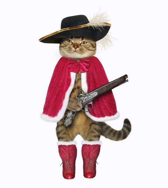 Cat musketeer with a pistol 2 stock photo