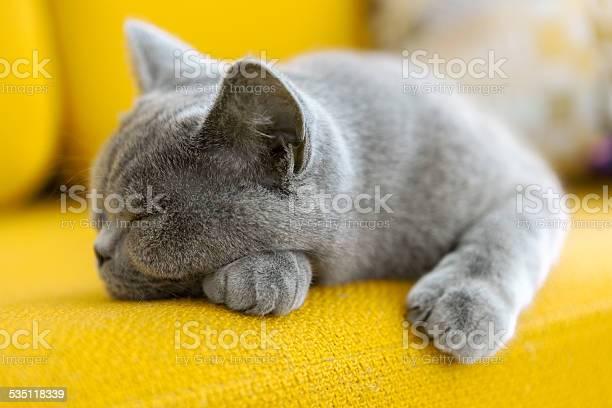 Cat nap picture id535118339?b=1&k=6&m=535118339&s=612x612&h=awb vua i3p7eocxvfl dpbgk1lqmx p0yamgjv pdu=