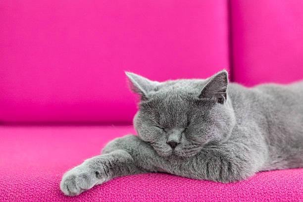 Cat nap picture id535161571?b=1&k=6&m=535161571&s=612x612&w=0&h=t8b3xo8spdrwrkasiwx4 j8trwke1v 2nm05w4iude4=