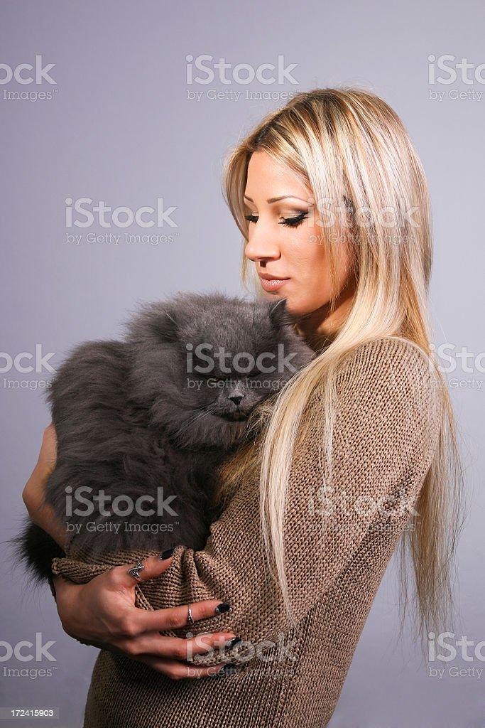 Cat napping royalty-free stock photo