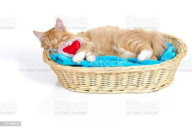 Cat napping with heart pillow picture id174489432?b=1&k=6&m=174489432&s=612x612&h=18phh6l0pc eljyxyagl2i3bx5u8uqenynzullcvgau=