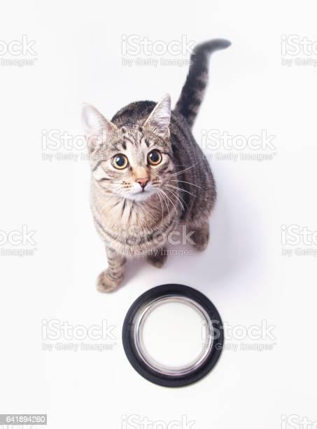 Cat near bowl with milk picture id641894260?b=1&k=6&m=641894260&s=612x612&h=p3slgoqwlunnt595akf2x n54r2jgackxwoysfmmpay=