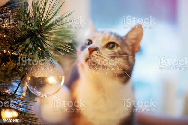 Cat near the christmas tree with lights and toys picture id530504481?b=1&k=6&m=530504481&s=612x612&h=rs6ihlo4l jefhknxnkssg7ftgrnhuy2mg96diy sjg=
