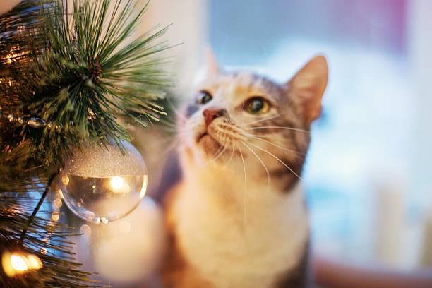Cat near the christmas tree with lights and toys picture id530504481?b=1&k=6&m=530504481&s=612x612&w=0&h=ckex0ixpmuszi4nfmhf8m3efsrueaqmvybjncq93jgg=