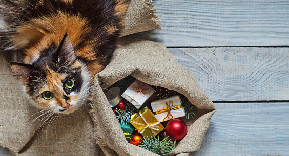 istock Cat near the sack with Christmas gifts 874991054