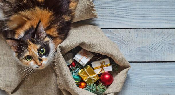 katze in der nähe der säckchen mit weihnachtsgeschenke - katze weihnachten stock-fotos und bilder