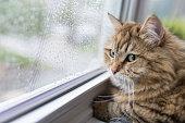 雨の日の窓の近くの猫