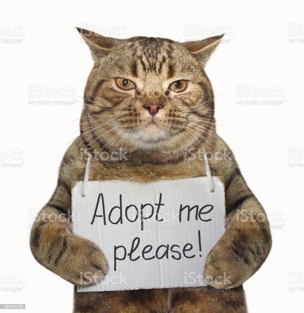 Cat needs a new family stock photo