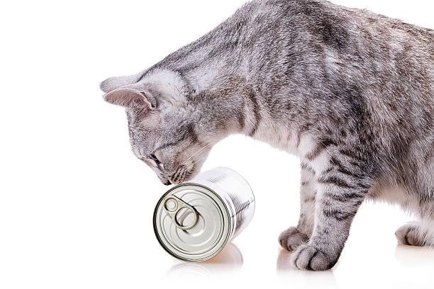 gato de estanho - lata comida gato imagens e fotografias de stock
