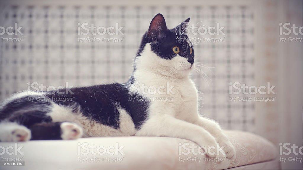 Fotografía de Gato De Blanco Y Negro Para Colorear Se y más banco de ...