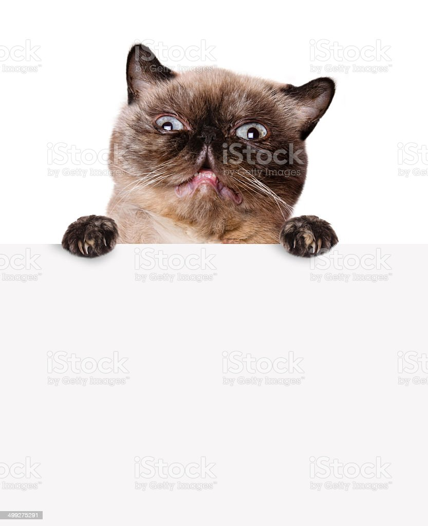 Cat of the white banner. stock photo
