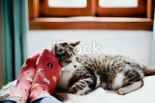 Animal Themes, Bedroom, Domestic Animals, Home Interior, Human Foot