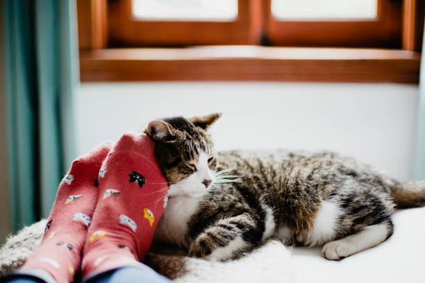 Cat on a bed and feet of a person stock photo