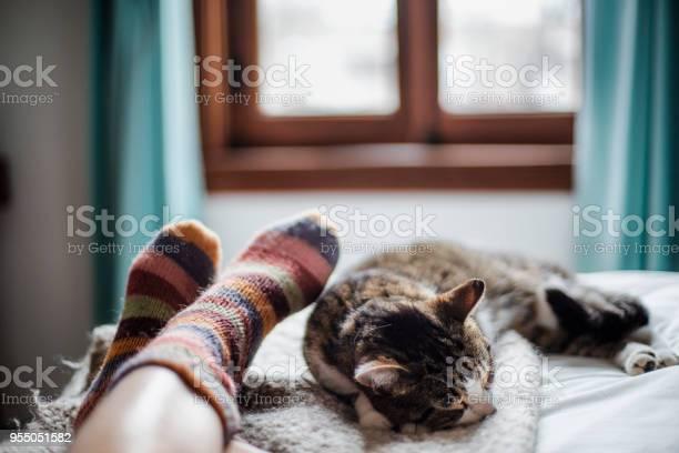 Cat on a bed feet of a person picture id955051582?b=1&k=6&m=955051582&s=612x612&h=wv3ftvx5r5otfvjtxurovvynfztzc8gyzpwm3eowfia=