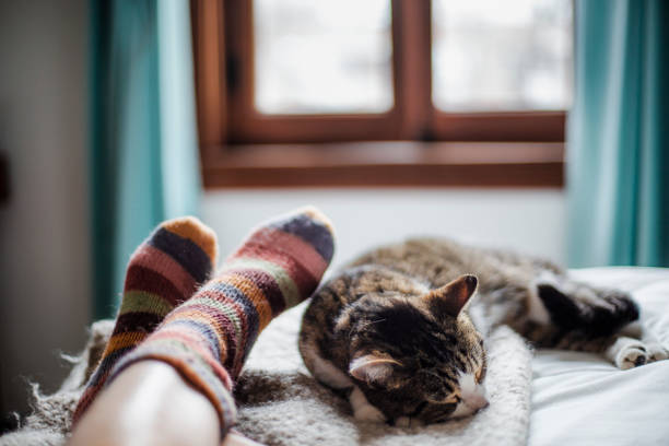cat on a bed feet of a person domestic animal, cat, human foot, togetherness domestic animals stock pictures, royalty-free photos & images