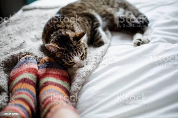 Cat on a bed feet of a person picture id955051584?b=1&k=6&m=955051584&s=612x612&h=6rckqch4iylefapxqas51ndgm7ibcgekdsxe1ovu8o8=