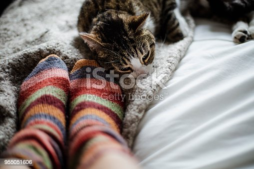 domestic animal, cat, human foot, togetherness