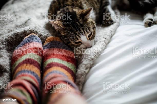 Cat on a bed feet of a person picture id955051606?b=1&k=6&m=955051606&s=612x612&h=lsfjwramhaj2ocl2ga620x4f me9kbe75ghzc4scc64=