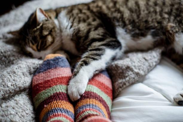 Cat on a bed feet of a person picture id955051626?b=1&k=6&m=955051626&s=612x612&w=0&h=xg d bgfmr76s0la2aha6b4yekc3yca88 hr2leshb0=