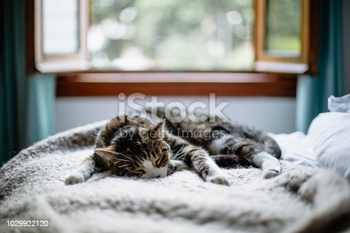 animal, domestic cat, bedroom, cozy