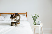animal, domestic cat,  bedroom, bed, books, mobile  phone