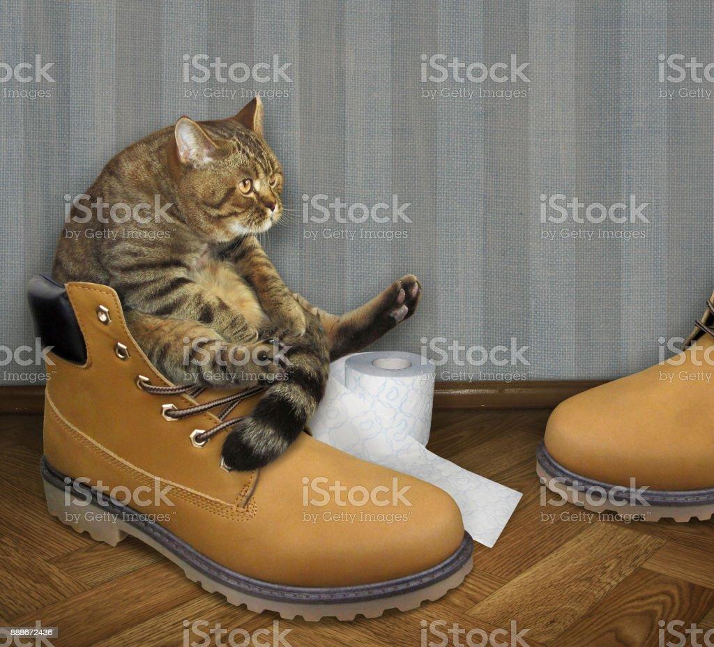 Cat on a big shoe stock photo