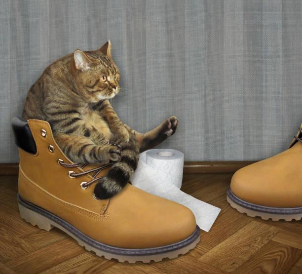 Gato en un zapato grande - foto de stock