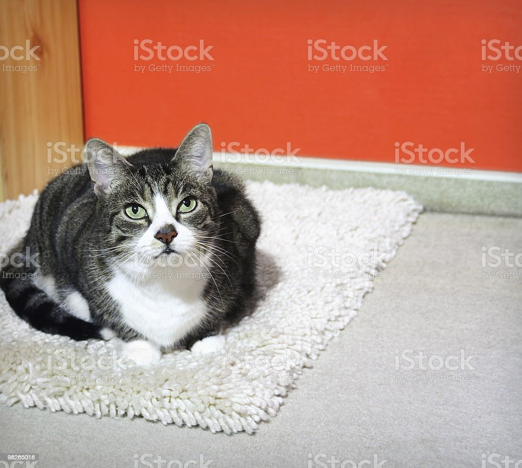 Cat on a carpet royalty-free stock photo