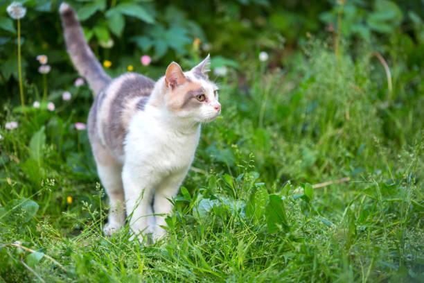 Cat on a grass picture id1160243739?b=1&k=6&m=1160243739&s=612x612&w=0&h=t7fgod xlchqe2fm257lpsnhceoofod4r9ivcgqwtwm=