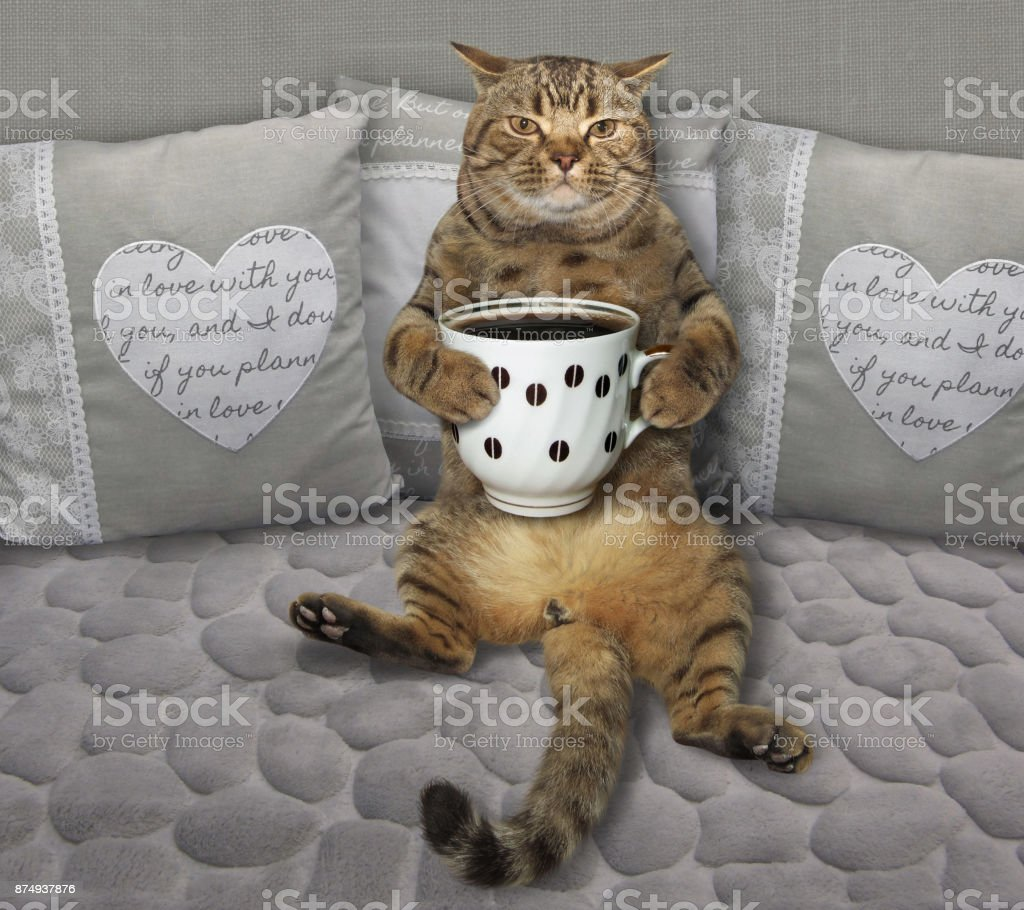 Cat on a gray sofa with coffee stock photo