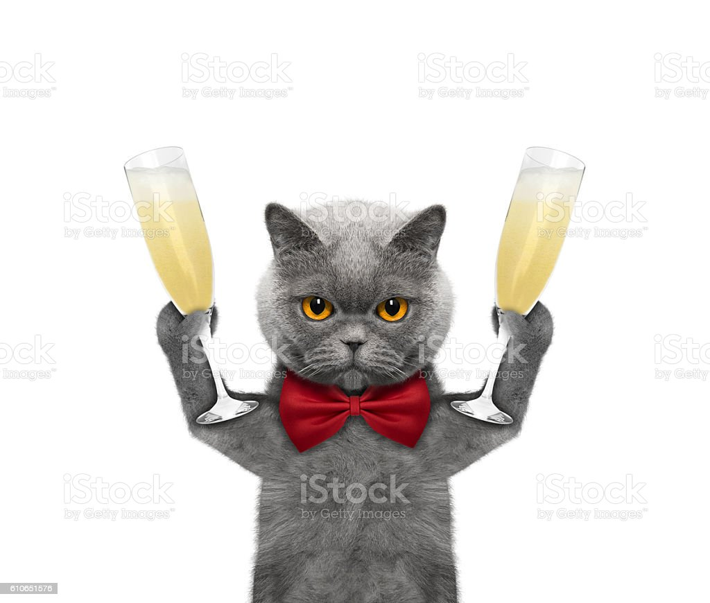 Cat on a holiday with a glass of champagne stock photo