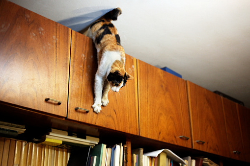 A Cat On A Home Library Stock Photo - Download Image Now