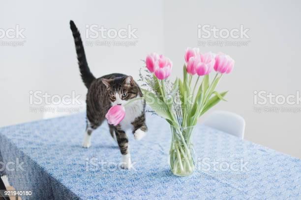 Cat on a kitchen table picture id921940180?b=1&k=6&m=921940180&s=612x612&h=rjbphxlizgilmgcbsy7ya0i0raijsb2x3z wnk6gki4=