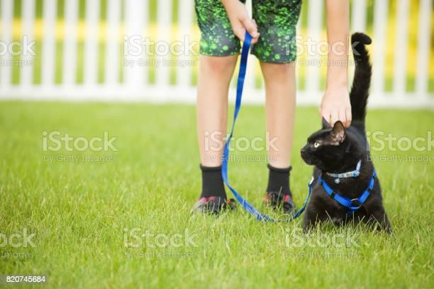 Cat on a leash getting pet picture id820745684?b=1&k=6&m=820745684&s=612x612&h=xbrsabliqka uccnfn ygke9ciagtwdk5dsvurru1wg=
