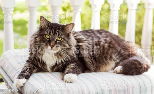Cat on a pillow picture id1044656750?b=1&k=6&m=1044656750&s=612x612&h=ssgkucjbzzidmooizm 9iukzae2m7i4xhax0hhhkgzi=