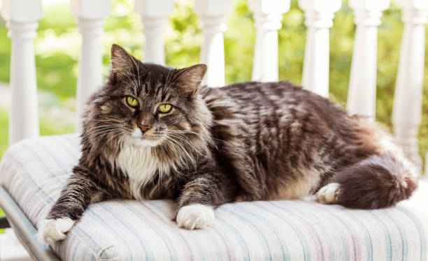 Cat on a pillow stock photo