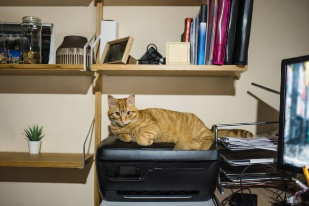 Cat on a printer picture id1147180436?b=1&k=6&m=1147180436&s=612x612&w=0&h=ofw 1krwzeggjderdvtut f4plqltwzhz2rhhohwpbu=