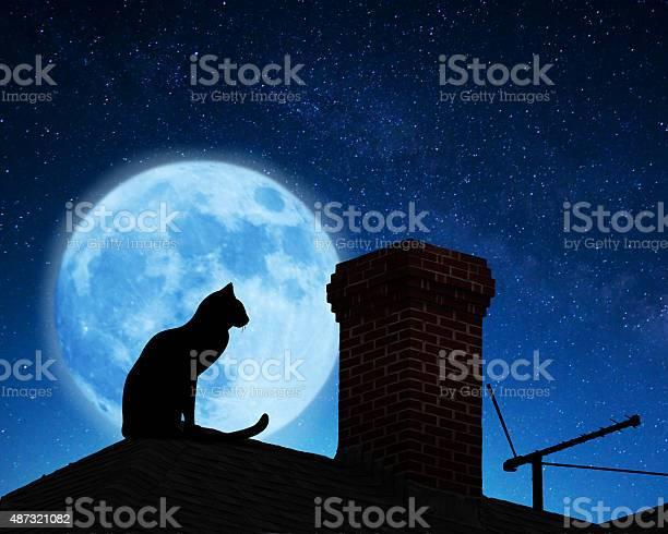 Cat on a roof picture id487321082?b=1&k=6&m=487321082&s=612x612&h=09hnrm7hlfujktlq9kacvjpgfbptwj6gt6kj5fna2lg=
