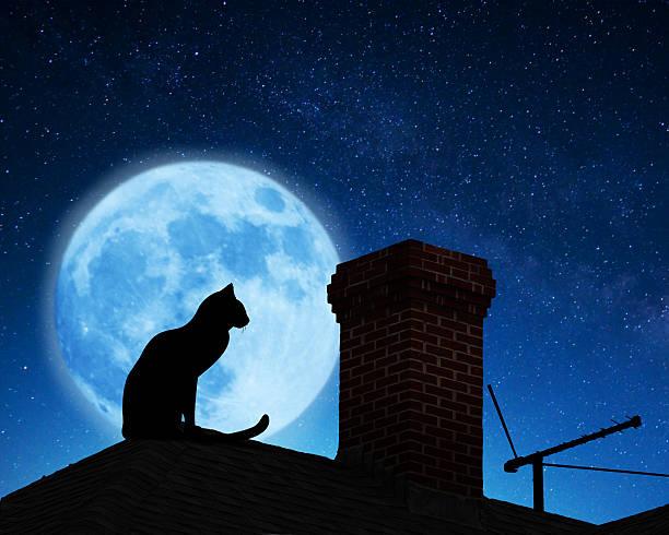 Cat on a roof picture id487321082?b=1&k=6&m=487321082&s=612x612&w=0&h=int9dgcxz3gwz0eiro8rsqrqvk lwxk6egbgye9fhaq=