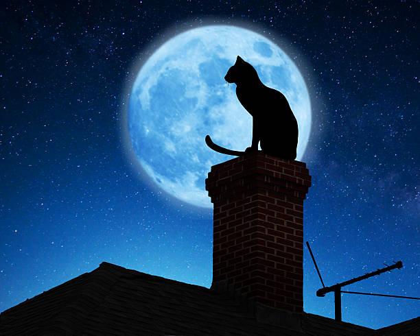 Cat on a roof picture id487321084?b=1&k=6&m=487321084&s=612x612&w=0&h=ikcdudob4z0a3qnroto4rpu31i6gzqmblzsjq5dcznu=