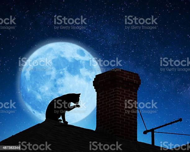 Cat on a roof picture id487383344?b=1&k=6&m=487383344&s=612x612&h=ycxzmhdsetka8337iorqlaawdxwmzt9iobugmmwcnfy=