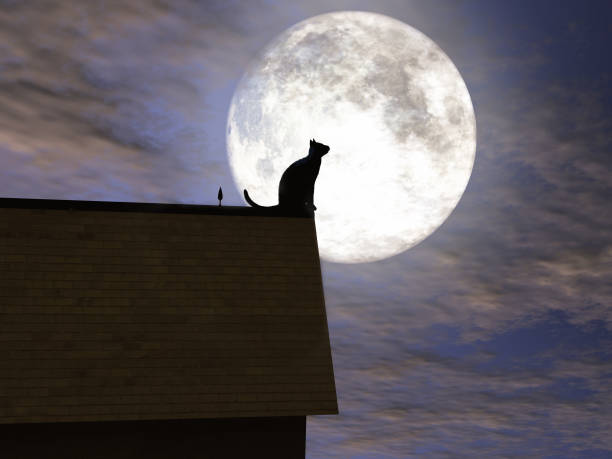Cat on a roof with the moon in the background picture id1152857206?b=1&k=6&m=1152857206&s=612x612&w=0&h=29ws83hjcwxfzotvpcydp18dqdqdibhdbe sawpsuuw=